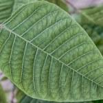 Green Leaf Macro — Stock Photo #28463583