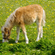 Horse foal is eating grass - Stockfoto