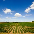 Rows of plants - Stockfoto