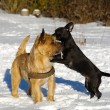 Stock Photo: Two dogs playing