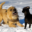 Two dogs playing — Stock Photo #13368457