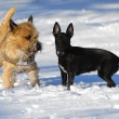 Two dogs in snow — Stock Photo