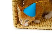 Kattunge med hatt — Stockfoto