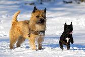 Two dogs — Foto de Stock