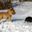 Two dogs in the snow — Stock Photo