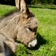 Sad donkey — Stock Photo #39091227