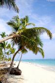 Praia com areia branca e palmeiras — Foto Stock
