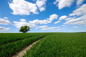 Field with tree on hill — Stock Photo