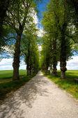 Pathway with trees — Stock Photo