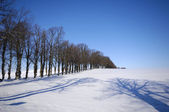 Trees on hill at winter — Foto de Stock