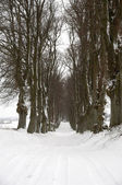 Pathway at winter — Stock Photo