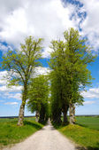 木の細道 — ストック写真