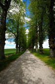 Pathway with trees — Stock Photo