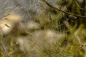 örümcek 003 — Stok fotoğraf