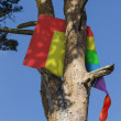 Kite stuck in a tree — Foto Stock