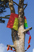 Kite stuck in a tree — Stock Photo