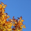 Stock Photo: Oak tree over blue sky