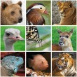 Animals from zoo - Stock Photo