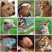 Animals from zoo — Stock Photo