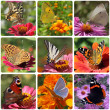 Butterflies - Stock Photo