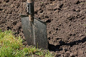 Shovel in a ground — Stock Photo