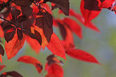 Red leaves — Zdjęcie stockowe