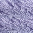 Stock Photo: Frost pattern