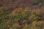 лес на осень — Стоковое фото