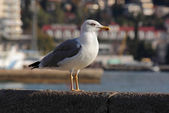 Seagull standing on quay — Stock Photo