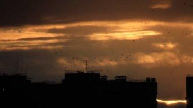 Birds flock flight over town — Stock Video