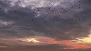 Sunset sky backgrounds birds flight — Stock Video