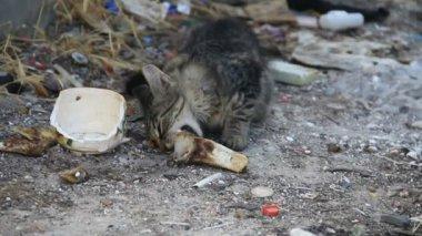 Kitten eating garbage — Stock Video