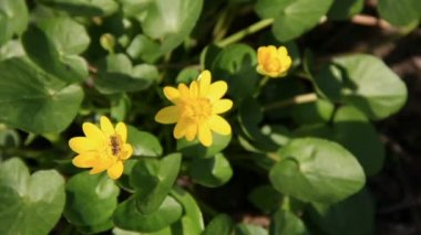 Vivid yellow flowers — Stockvideo