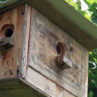 Starling nestling box in greenly garden — Stock Video