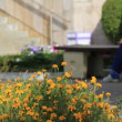 Flowerbed yellow flowers in public place — Stock Video #40247663