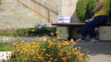 Flowerbed yellow flowers in public place — Stock Video