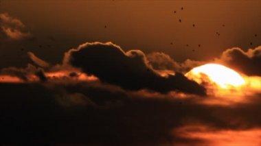 Birds flock silhouettes — Stock Video