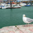 Seagull in harbor Dieppe — Stock Photo