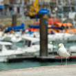 Seagull in harbor Dieppe — Stock Photo #13273784