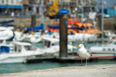 Seagull in haven dieppe — Stockfoto