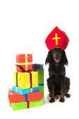 Dutch Sinterklaas dog — Stock Photo