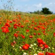 Royalty-Free Stock Photo: Fields with red Poppies