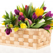 Basket tulips — Stock Photo #19410005