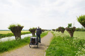 Row pollard willows and cow parsley — ストック写真