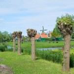 Windmills at the Zaanse schans — Stock Photo #20053943