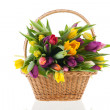 Basket tulips with handle — Stock Photo