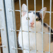 Cat in animal shelter - Stock Photo