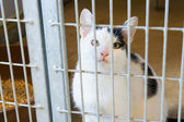 Cat in animal shelter — Stock Photo