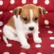Red spotted pet bed with little puppy — Stockfoto