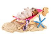 Beach puppy — Stock Photo
